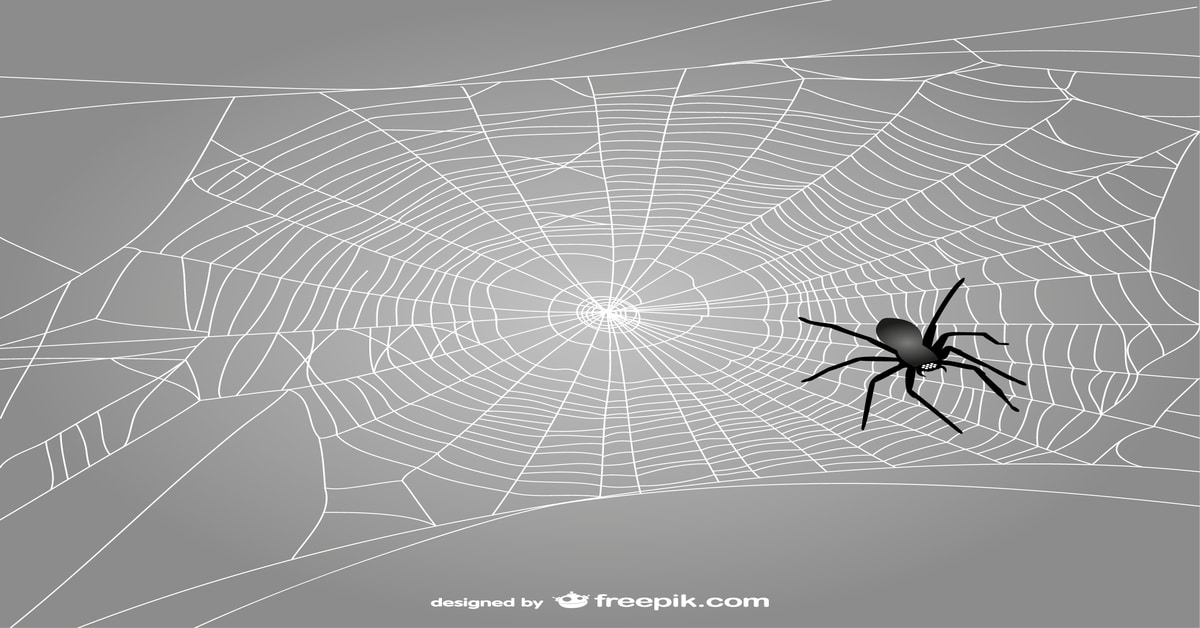 What Is Spider In SEO And How Do Spiders Work? | AIA